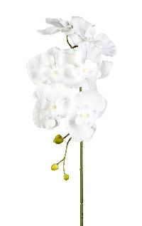Orchideenzweig Phalaenopsis WEISS 40 1017101 76cm 6 Blüten Ø8-10cm