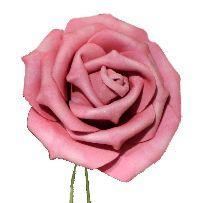 Rose Foam  Schaumrose Foamrose rosa  110186-20 Ø6cm