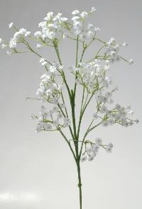 Schleierkraut / Gypsophila WEISS  124969 Pick 65cm