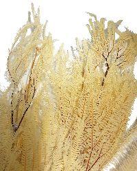 Farn Samambaia WEISS-GEBLEICHT 0020S001 100 g / Länge ca. 80 cm