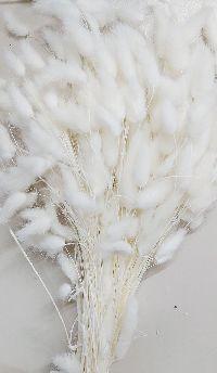 Lagurus / Samtgras weiss 5067 100 Gramm Hasenschwanz Gras